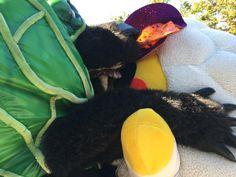 メロン熊しゃーー…  #安定の捕食 #hikone2015 #jingisu_jin