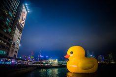 Rubber Duck Hong Kong, China