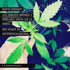 Nuevo horario los sábados una hora más abiertos  de 11 a 14 horas #marihuana #bitchimhigh #weed #marijuana #kush #cannabis #ganja #420 #high #stoner #smoke #weedporn #herb #instagood #instadaily #dope #love #relax #chillcom #dank #life #bud #hrbnlife #stonerdays #highlife #greenlife #lifted #maryjane #hightimes #herblife