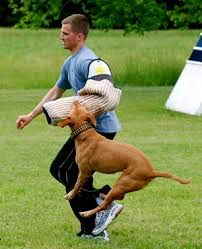 Dog Training Fairfax - We are most well-known for our military/police precision obedience; meaning, the dogs are outside, off-leash, with distractions and performing flawlessly.