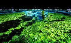 """坂井直樹の""""デザインの深読み"""": 「調和のとれた多様性」をテーマに、チームラボは、2015年ミラノ国際博覧会の日本パビリオン内に「ハーモニー」と「ダイバシティ」2つを展示。"""