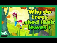 Why Do Trees Shed Their Leaves In Autumn Season? - YouTube