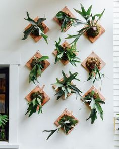 TFW the staghorn fern wall is looking super dialed just in time for the weekend
