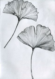 Ginkgo leaf drawing Ginkgo tree tattoo - tree sheet drawing Best Picture For inspirational tattoo For Your Taste Y - Et Tattoo, Tattoo Tree, Sketch Tattoo, Blatt Tattoos, Leaves Sketch, Japanese Tattoo Designs, Japanese Tattoos, Leaf Drawing, Drawing Art