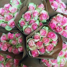 Mothers day Flowers Mothers Day Flowers, Rose, Plants, Flowers For Mothers Day, Roses, Plant, Planting, Planets