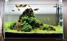Nano Aquarium, Aquarium Design, Aquarium Fish Tank, Planted Aquarium, Aquarium Landscape, Nature Aquarium, Aquascaping, Betta Tank, Nano Tank