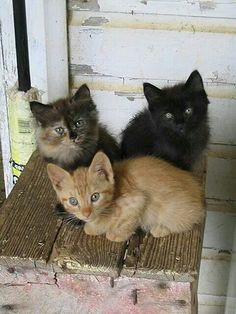 Three little kittens who lost there mittens