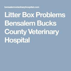 Litter Box Problems Bensalem Bucks County Veterinary Hospital