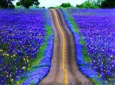 Our goal to be in Texas when the bluebonnets were in bloom. Now my goal to see it for both of us. It was something he really missed from home. I wish we'd have had the right timing to have seen this before it was too late. Blue Flowers, Wild Flowers, Beautiful World, Beautiful Places, Texas Bluebonnets, Texas Hill Country, Country Roads, Blue Bonnets, Beautiful Landscapes