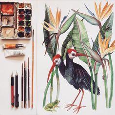 Bird illustrations by Georgina Taylor