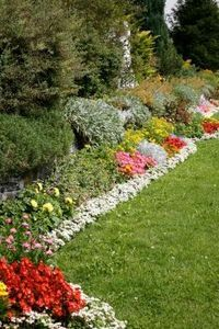 Best annuals to plant in full sun.