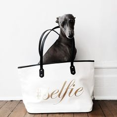 #selfie in my @aldo_shoes_ bag #TsukiAndBags #ItalianGreyhound