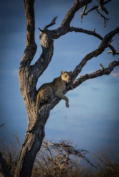 Enjoying the last light of the day in Chobe National Park, Botswana ©Amanda Conradie