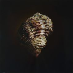 Fibonacci's Gold (300dpi)