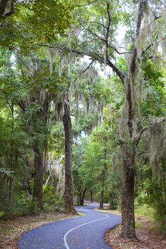 Gulf Oak Ridge Trail. Gulf State Park. Orange Beach. Alabama.