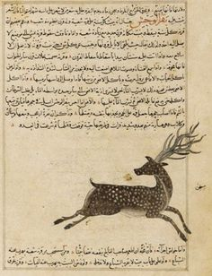 Folio from Aja'ib al-makhluqat (Wonders of Creation) by al-Qazvini; recto: Manuscript only; verso: Wild Ox (Bagar al-Wahsh) early century Opaque watercolor, ink and gold on paper H: W: cm Iraq or Eastern Turkey (via Arts of the Islamic World