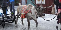 """""""Rudolph the Reindeer"""" at Baerums Verk outside Oslo"""