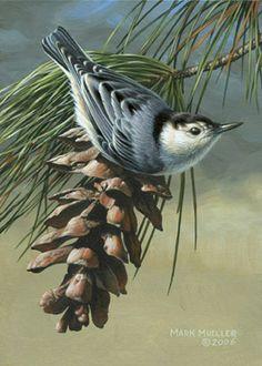 Mark Mueller Wildlife Art bird painting ~ Nuthatch