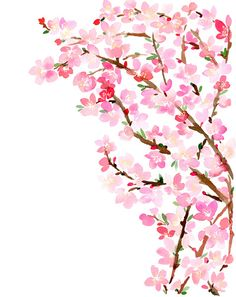 Watercolor Cherry Blossoms Art Print
