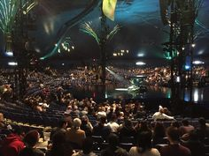 amaluna from cirque du soleil.. a show before presentation.. not sure good or bad idea..