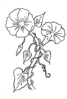 Today I will explore September's Flower of the Month - the Morning Glory. This is the first of two flowers for the month. The seco. Coloring Pages For Boys, Colouring Pages, Floral Illustrations, Illustration Art, Morning Glory Tattoo, Printable Flower Coloring Pages, Morning Glory Flowers, Let's Make Art, Watercolor Sunflower