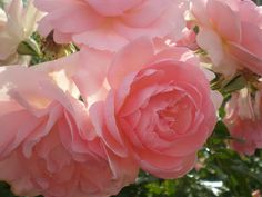 Tales from a Cottage Garden: July 2012