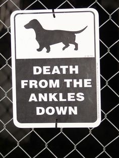 Funny Dachshund Dog Warning Sign                                                                                                                                                                                 More