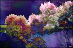 Floral fantasy by PaulO Classic. ©, via Flickr