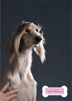 Read more: https://www.luerzersarchive.com/en/magazine/print-detail/cinderella-29585.html Cinderella Campaign for a canine grooming salon. Tags: Lemon Scented Tea, Amsterdam,Cinderella,Ewoudt Boonstra,Peter Verduin