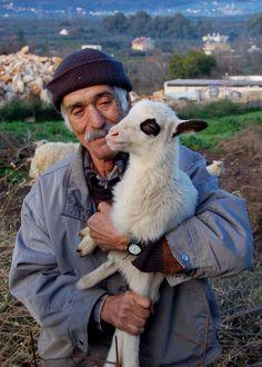 Pavlo's sheep on the Greek island of Crete