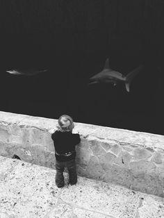 shark / #judah | shawnroller | VSCO Grid