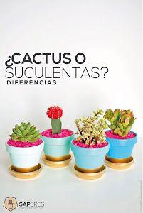 Si eres de los que no tiene muy claras las diferencias entre los cactus y las plantas crasas, echa un ojo al contenido de SAPERES y descúbrelo.