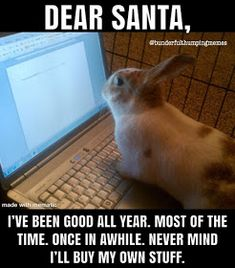 Guess I like to collect things. Here are some memes that have been found around the internet and perhaps been featured in a Rabbit Rambli. Bunny Paws, Pet Bunny Rabbits, Cute Baby Bunnies, Pet Rabbit, Funny Bunnies, Super Cute Animals, Cute Funny Animals, Cute Baby Animals, Funny Cute