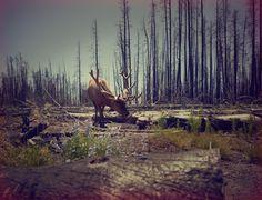 Nick Meek on levineleavitt.com #photography #landscape #animals #moose