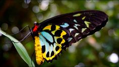Butterfly #roadtrip #australia #freedom #luftmensch #luftmenschren #followyourdreams #journey #travel #picoftheday#instagood #photography #blog