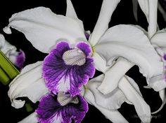 Orchidea by André Goldenberg on 500px
