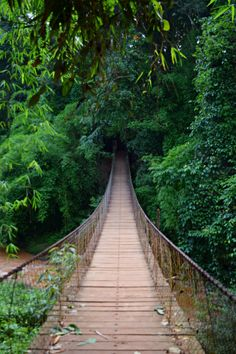 Walking in the jungle in Cambodia | Eternal Expat