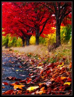Autumn Grove | Flickr - Photo Sharing!