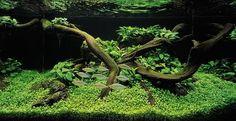 aquarium setup ideas | Thread: Freshwater Aquariums