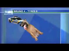 Dog biting graphic on 3 News - YouTube  The funniest graphics ever