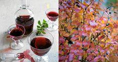 Gör härlig saft av nyttiga aroniabär – bästa receptet | LAND.se Land, Alcoholic Drinks, God, Alcoholic Beverages, Liquor, Alcohol Mix Drinks
