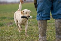 Gun Dogs: A Game That Will Turn Your Pup Into a Retrieving Machine | Field & Stream