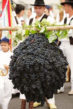 Madeira Wine Festival - Madeira Island, Portugal (Now that is a SERIOUS amount of grapes! Portuguese Culture, Wine Vineyards, Funchal, Vides, Wine Cheese, Italian Wine, In Vino Veritas, Wine Festival, Wine Time
