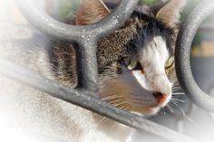 spy cat - Espiando al gato que espía