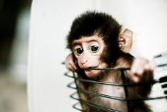 i want a pet monkey