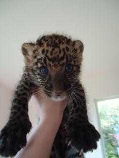 West Coast Game Park Safari in Bandon, Oregon. LOVE to pet the babies!
