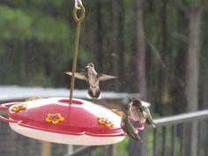 MYO Hummingbird Nectar