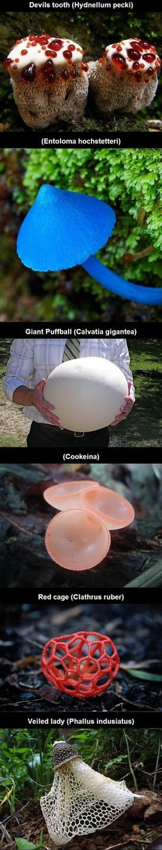 Weird Wild Mushrooms Never Seen #exotic #wildlife #mushrooms http://www.adorabo.com/view/weird-wild-mushrooms