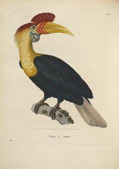 Nouveau recueil de planches coloriées d'oiseaux v.2 A Strasbourgh ;Chez Legras Imbert et Comp.,1838.