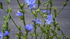 Korijen može da izliječi rak, a cvijet srce i dijabetes: Zašto ovu biljku stalno bacamo?! – Zdravlje prije svega